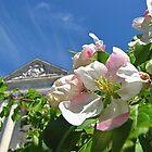 Spring has sprung! by Nancy Richard