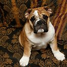 Sit! Big Boy by Jay Reed