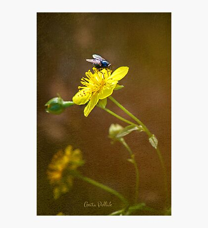 Fly on a Barrenwort Flower Photographic Print