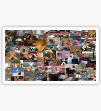 FUNNY DOG PICS Sticker