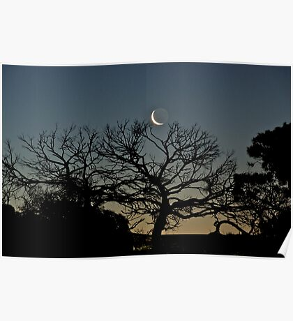 Tickling the Moon Tree Poster