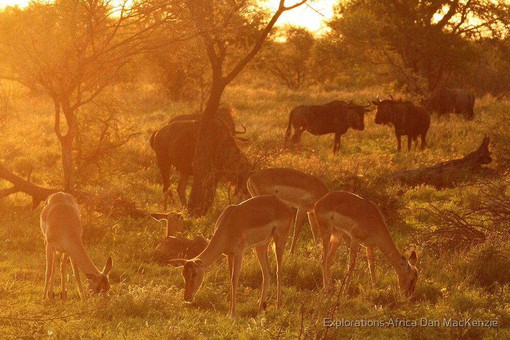 Company of friends by Explorations Africa Dan MacKenzie