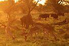 Company of friends by Explorations Africa Dan MacKenzie
