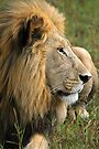 Surveying his realm by Explorations Africa Dan MacKenzie