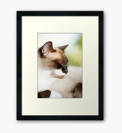Sleepy Puss Framed Print