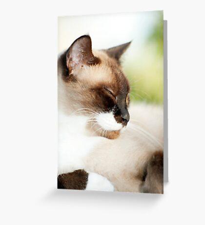 Sleepy Puss Greeting Card