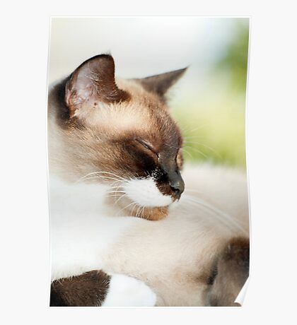 Sleepy Puss Poster