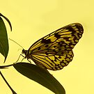 Flutterby by John Lines