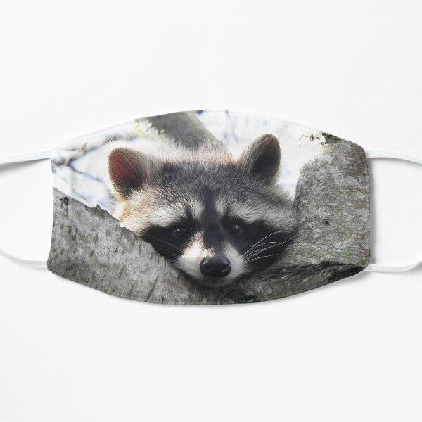 Bored Raccoon Flat Mask