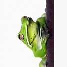 Froggie iphone/ipod case by Jenny Dean
