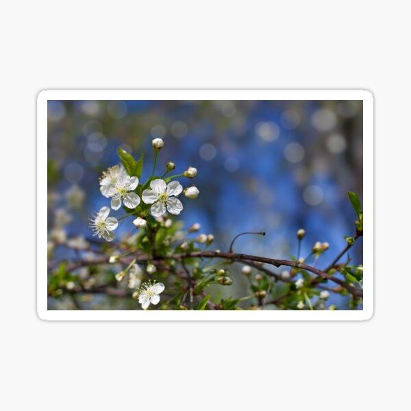apple blossom against blue sky Sticker