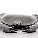 Crab by jon  daly
