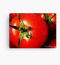 RED RED TOMATOE Canvas Print