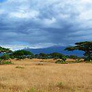 Kilomanjaro in the clouds by Linda Sparks