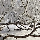 Snowy Branches by TesniJade