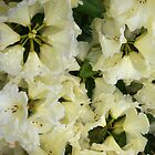 Rhododendron pale yellow by Julie Van Tosh Photography