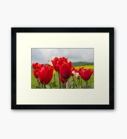 Tip to thru the Tulips Framed Print