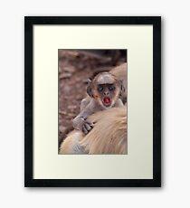Baby Langur Monkey Ranthambore Fort Framed Print
