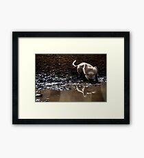 Langur Monkey at Waterhole Ranthambore Framed Print