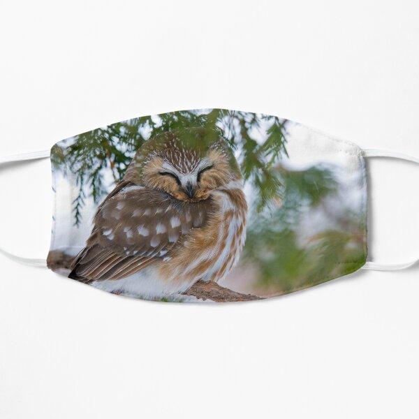 Sleeping Northern Saw Whet Owl - Ottawa, Ontario Flat Mask