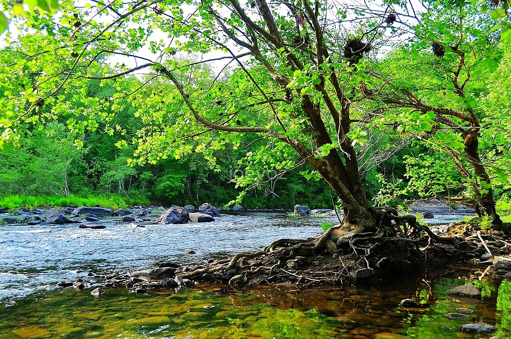 Tree on the River Bank by joevoz