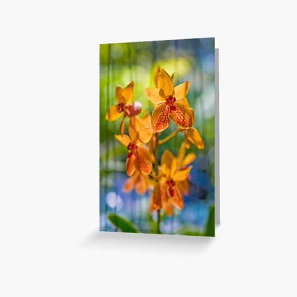 Orchidees flottantes  Greeting Card