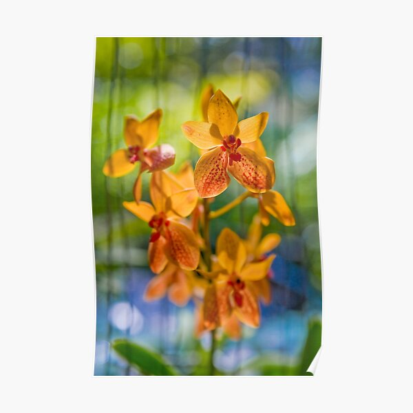 Orchidees flottantes  Poster