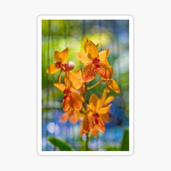 Orchidees flottantes  Sticker