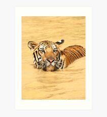Swimming Bengal Tiger Art Print