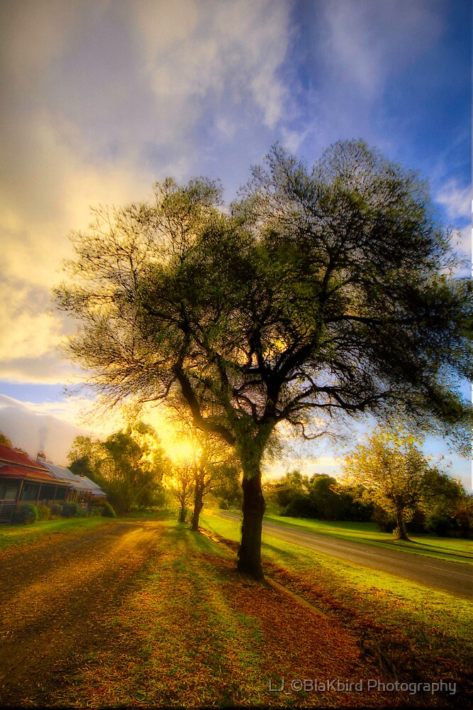 Country Golden Hour by LJ_©BlaKbird Photography