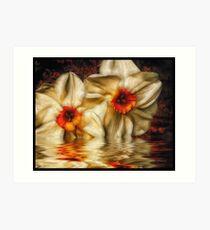 Daffodip Art Print