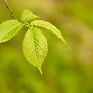 Spring Green by Lynne Morris