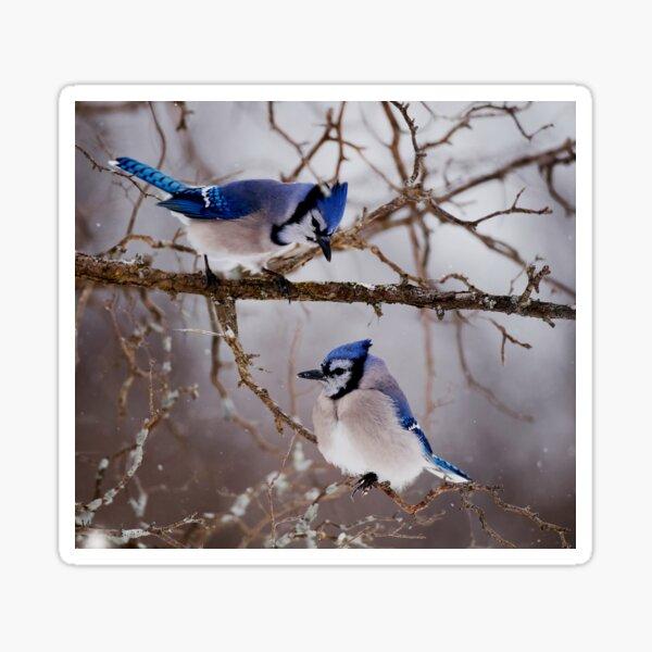 Blue Jays - Shirley's Bay, Ottawa Sticker