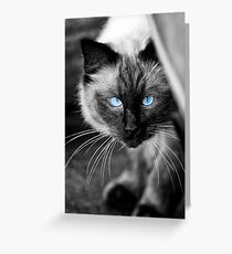 Ol Blue Eyes Greeting Card