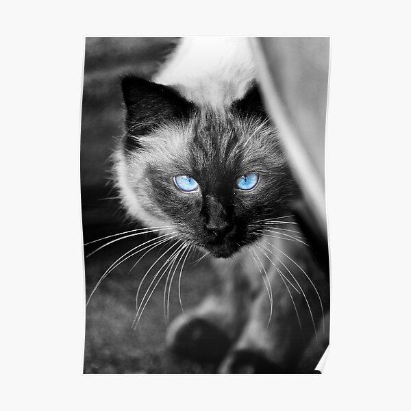 Ol Blue Eyes Poster