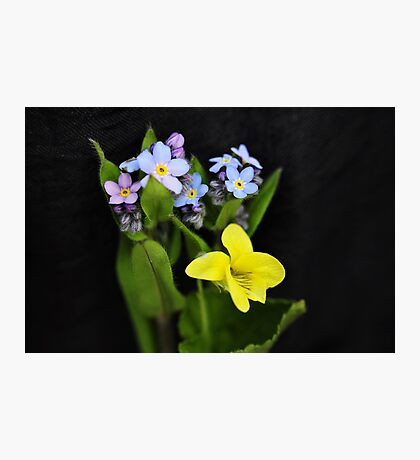 True-Forget-me-not Wildflowers with Round-leaved Yellow Violet Photographic Print