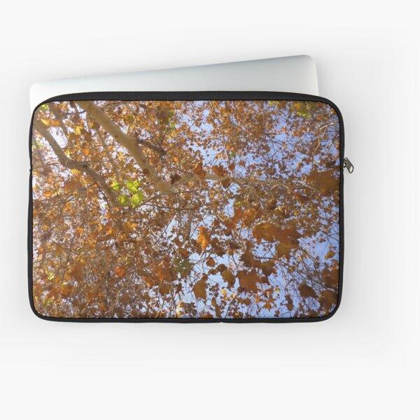 Bright Fall Foliage Laptop Sleeve