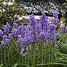 Bluebells at Home by John Lines