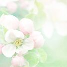 Apple Blossom Pink by Sharon Johnstone