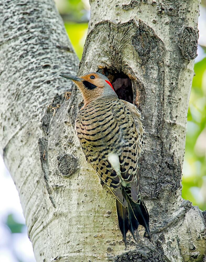 At the nest  by Daniel  Parent