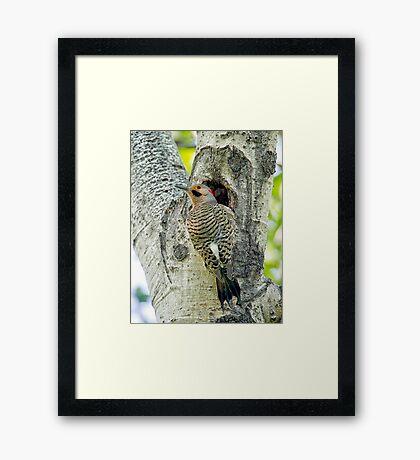 At the nest  Framed Print