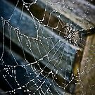 Spider Web by David Lester