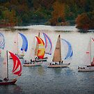 Sailboat Regatta by David Lester