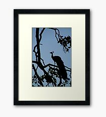 Silhouette of Peacock in Tree Ranthambore Framed Print