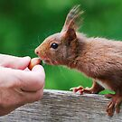SQUIRREL DIARIES -II- by mc27