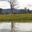 Reflection of a Gum Tree by TheaShutterbug