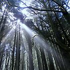 Forest At Neptune Beach, Yachats, Oregon by Diane Arndt