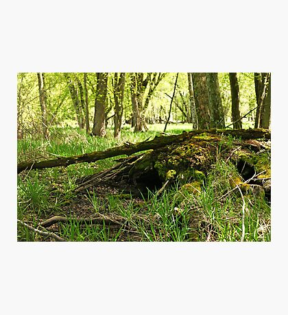 White River Marsh Landscape 6782 Photographic Print