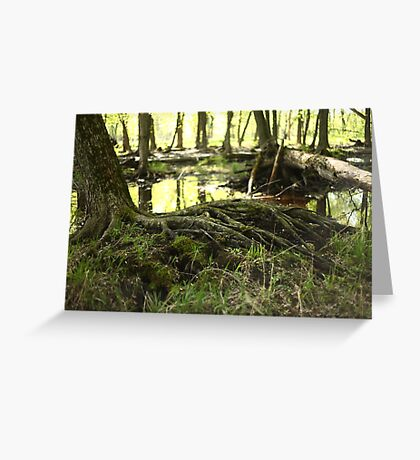 White River Marsh Landscape 6799 Greeting Card