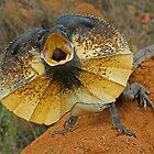 Frill-Necked Lizard by mattreptiles
